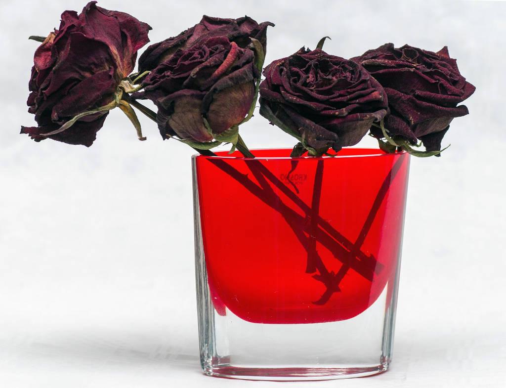Comment Faire Secher Une Rose Fraiche comment sécher les fleurs - le bazaar