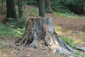 Aouche d'arbre